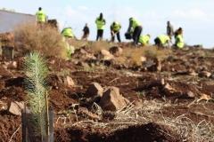 Plan-voluntariado-ambiental-Cabildo-de-Gran-Canaria-2-e1530108140165