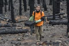 Plan-voluntariado-ambiental-Cabildo-de-Gran-Canaria-3