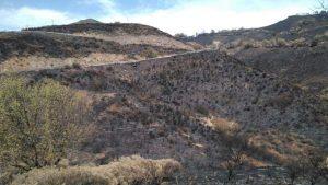 SAGULPA colabora con Fundación Foresta en la restauración de los ecosistemas forestales de Gran Canaria tras el incendio