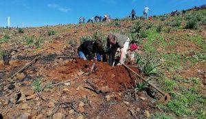 Foresta lleva a cabo una reforestación inclusiva
