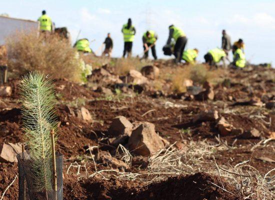 Plan de Voluntariado Ambiental del Cabildo de Gran Canaria