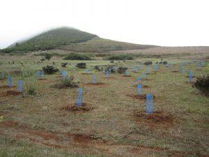Foresta pide más apoyo para el 'empleo verde' (CANARIAS 7)