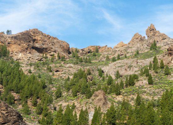 Foresta y la Regata ARC inician la undécima edición de plantación de árboles en Gran Canaria