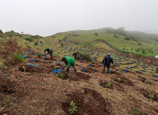 El proyecto de empleo 'Foresta Plantamos Futuro' planta un total de 12.093 árboles en Gran Canaria