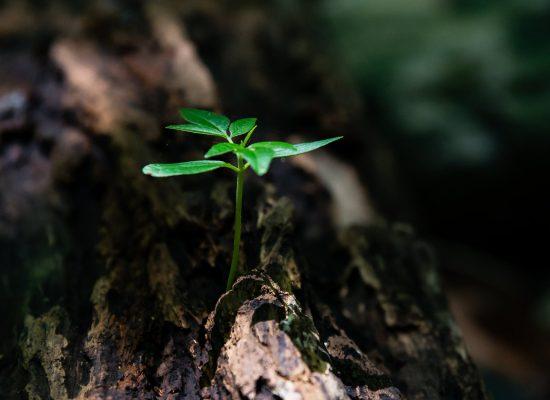 La gestión ambiental de Foresta facilita la inserción laboral de 51 desempleados
