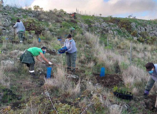 La III edición de 'Emplea Verde Gran Canaria 2020' reforesta la cumbre con más de 10.000 árboles