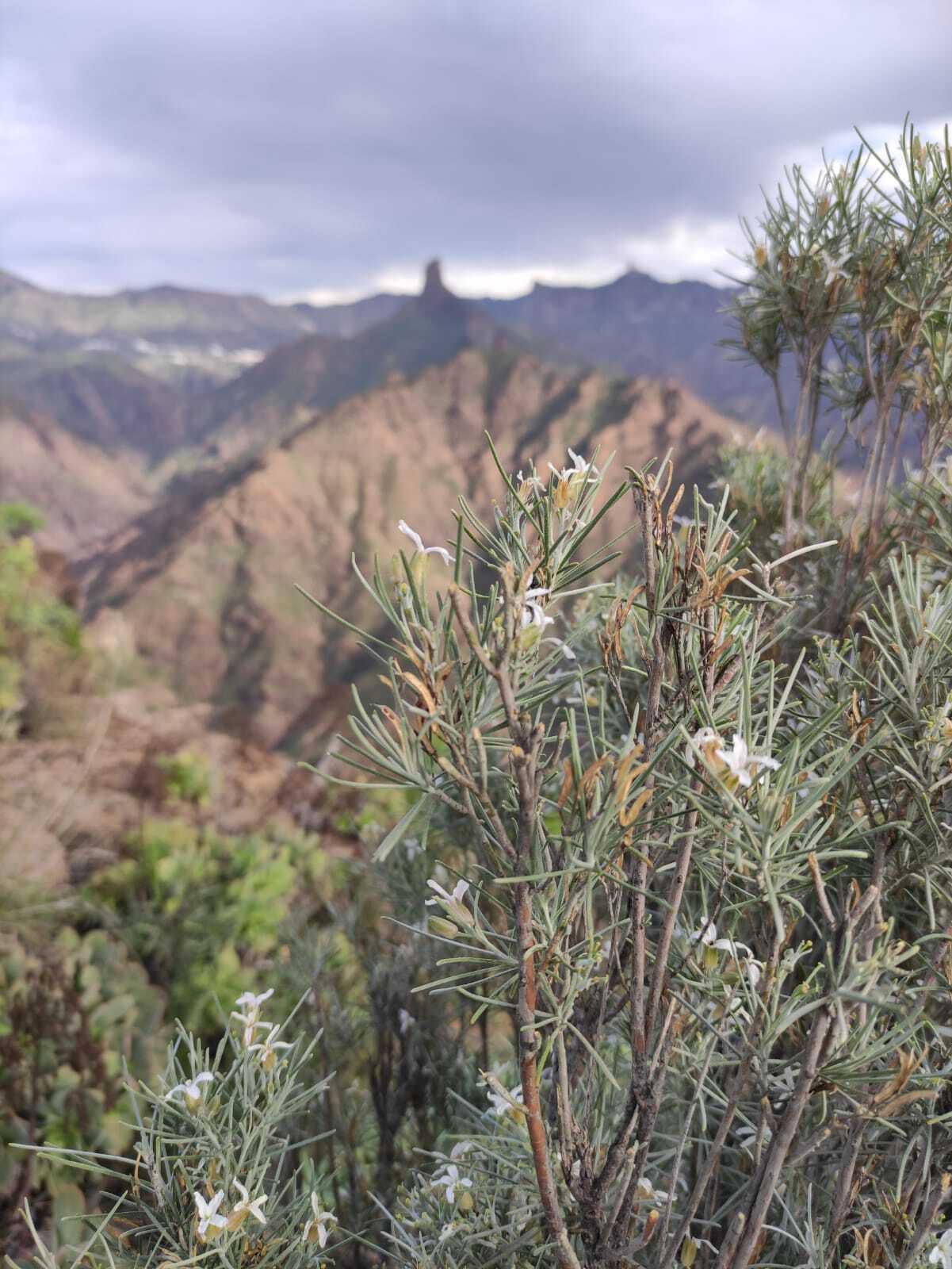 Foresta expone la importancia de la gestión y el trabajo que se lleva a cabo en los viveros de Canarias