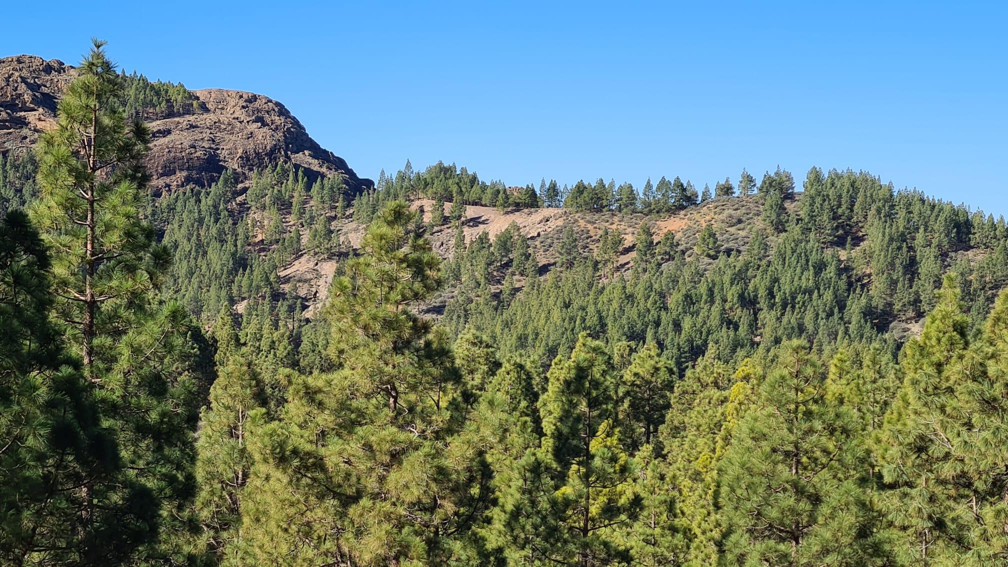 Foresta y Arkopharma apuestan por la supervivencia de los bosques