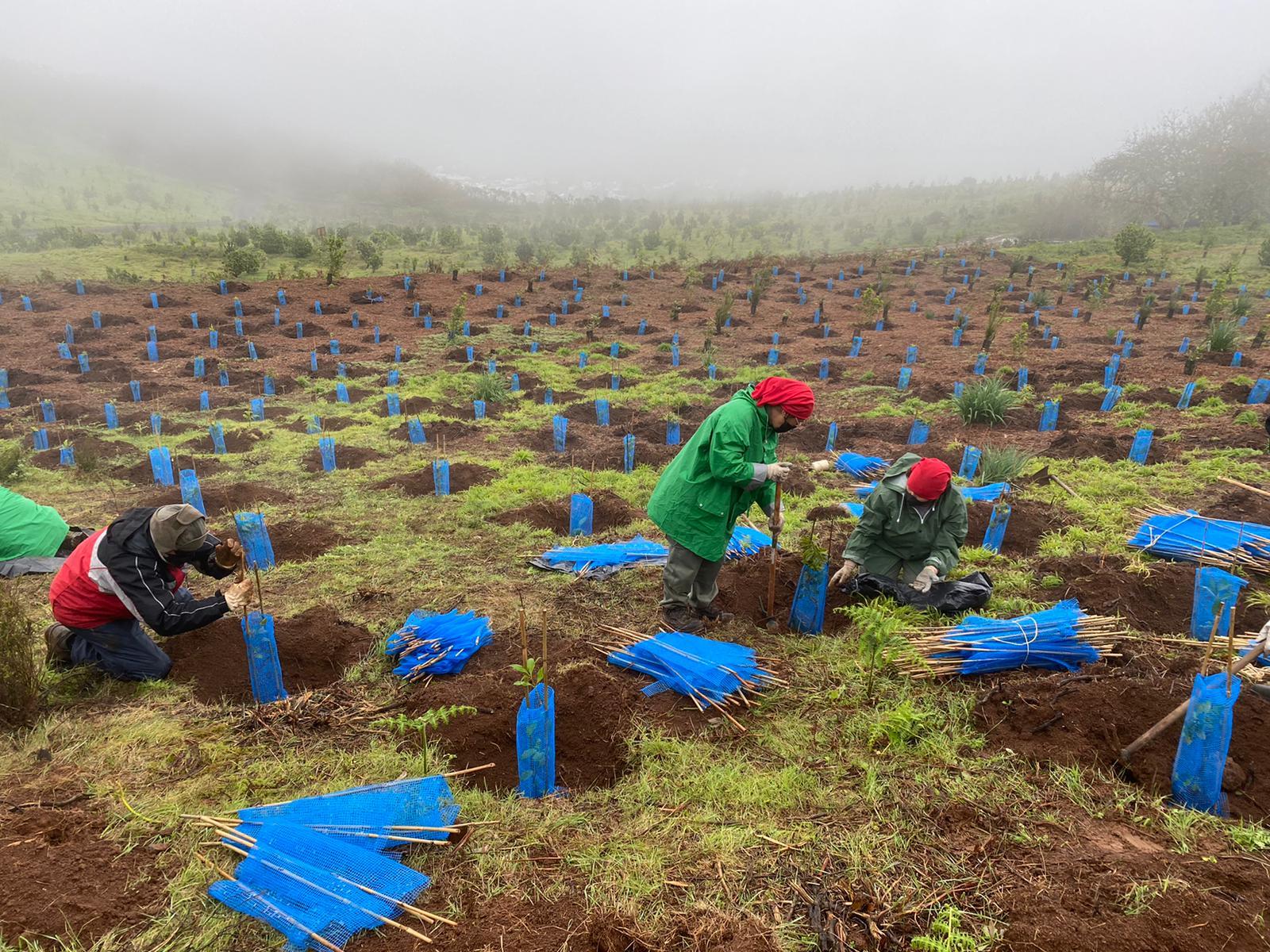 'Emplea Verde Gran Canaria' inicia el proceso de selección  de personal